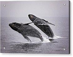 Synchronized Double Breach Acrylic Print
