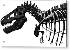 T-rex Acrylic Print by Martin Newman