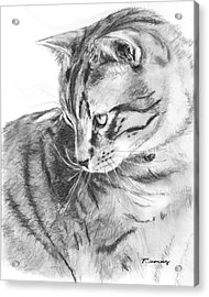 Tabby Cat In Profile Drawing Acrylic Print