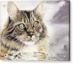 Tabby Cat Jellybean Acrylic Print by Keran Sunaski Gilmore