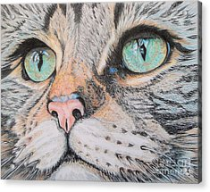 Tabby Cat Acrylic Print by Yvonne Johnstone