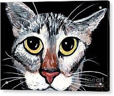 Tabby Eyes Acrylic Print by Elaine Hodges