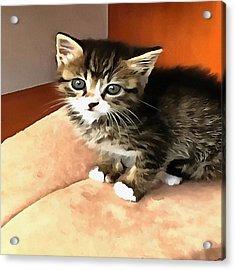 Tabby Kitten Named Miss Pip Squeak Acrylic Print by Tracey Harrington-Simpson