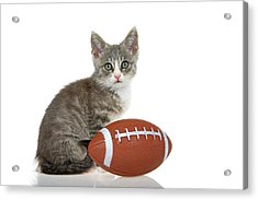 Tabby Kitten With Football Acrylic Print