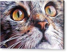 Tabby Look 2 Acrylic Print