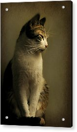 Tabby Portrait Acrylic Print