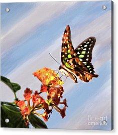 Tail Jay On Scarlet Milkweed Acrylic Print