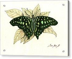 Tailed Jay Butterfly Acrylic Print by Juan Bosco
