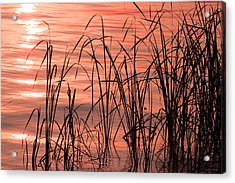 Tails Of Twilight Acrylic Print by Evelyn Patrick