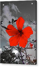 Take A Stand Acrylic Print by Robert Pearson