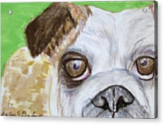 Take Me Home - Bulldog Acrylic Print by Barbara Giordano
