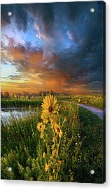 Take My Hand So I Might Reach You Acrylic Print by Phil Koch