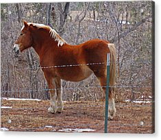 Acrylic Print featuring the photograph Take My Picture by Tammy Sutherland