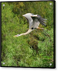 Acrylic Print featuring the photograph Take Off by Shari Jardina