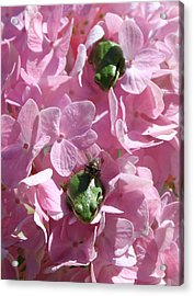 Take Out Acrylic Print by Tracey Levine