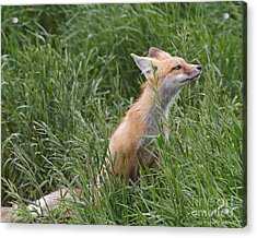 Take Time To Smell The Grasses Acrylic Print by Royce Howland