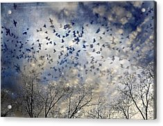 Acrylic Print featuring the photograph Taken Flight by Jan Amiss Photography