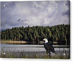 Acrylic Print featuring the photograph Taking A Break As Evening Falls by Diane Schuster