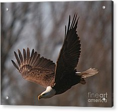 Taking Aim On Lunch Acrylic Print by Robert Pearson