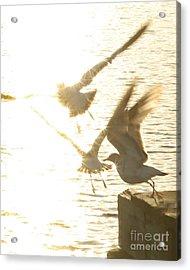 Taking Flight Acrylic Print by Angie Bechanan