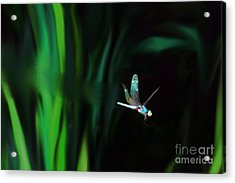 Taking Flight Acrylic Print