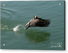 Acrylic Print featuring the photograph Taking Flight by Rod Wiens