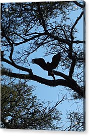 Taking Flight South Africa Acrylic Print by Patrick Murphy