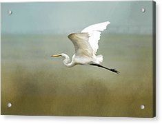 Taking Off  Acrylic Print