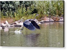 Taking Off  Acrylic Print by James Steele