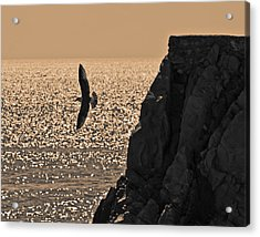 Taking Off Acrylic Print by Ron Dubin