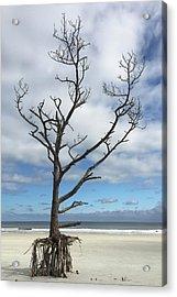 Talbot Stilt Tree #1 Acrylic Print