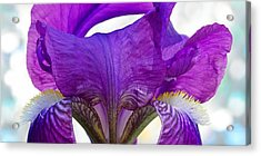 Tall, Bearded And Handsome - Iris Acrylic Print