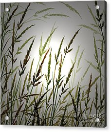 Acrylic Print featuring the digital art Tall Grass And Sunlight by James Williamson