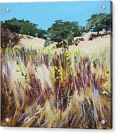 Tall Grass. Late Summer Acrylic Print