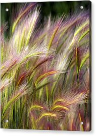 Tall Grass Acrylic Print