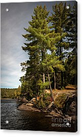 Tall Pines On Lake Shore Acrylic Print by Elena Elisseeva