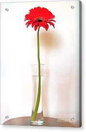 Tall Red Acrylic Print by Marsha Heiken