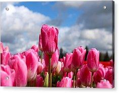 Tall Standing Tulip Acrylic Print