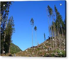 Tall Timbers Acrylic Print by Jim Thomson