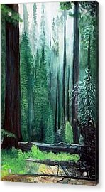 Tall Trees Acrylic Print by Julie Lamons