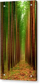 Tall Trees Acrylic Print by Svetlana Sewell