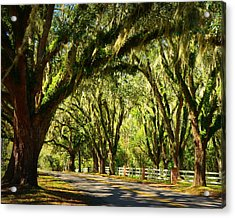 Tallahassee Canopy Road Acrylic Print