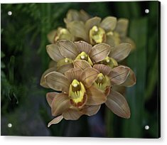 Tan And Yellow Orchid Acrylic Print by Liz Santie