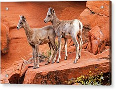 Tandem      Acrylic Print by James Marvin Phelps