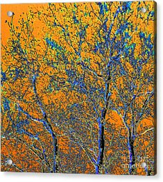 Tangerine Light Acrylic Print by Ann Johndro-Collins