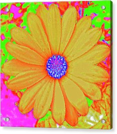 Tangerine Sunshine Acrylic Print by Ann Johndro-Collins