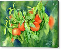 Tangerines With Background 2 Acrylic Print by Sharon Freeman