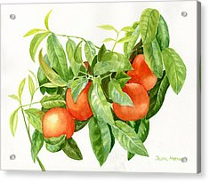 Tangerines With Leaves Acrylic Print by Sharon Freeman