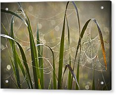 Tangled Highway Acrylic Print by Carolyn Marshall