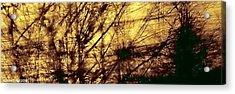 Tangled II Acrylic Print by Jane Tripp